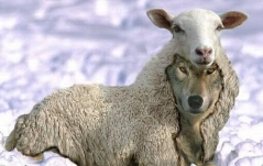 The always present wolf in sheep's clothing