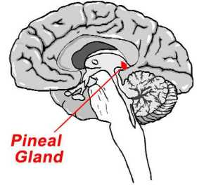 Is the pineal gland the doorway to God?