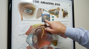 My eye doctor giving me a quick lesson in seeing. He is pointing to an image of the human head if we were looking down on it from above.