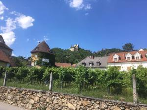 A vineyard in Dürnstein, Austria. Just a small village with lots of history and some great cafes.